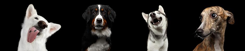 Hundesprache – Individuelles Hundetraining